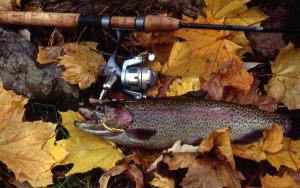 trout autumn fish leaves
